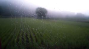 La WPO es una como una tela de araña